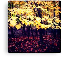 Under The Shade Of Yellow Canvas Print