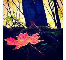 Autumn Perspective Photographic Print