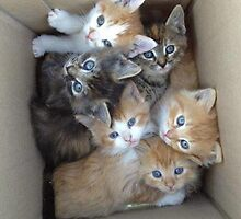 Cats in a Box by Cobras795