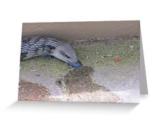 The Blue Tongue Lizard with tongue in view. Sth. Australia. Greeting Card
