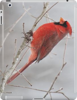 Cardinal IPad Case by barnsis