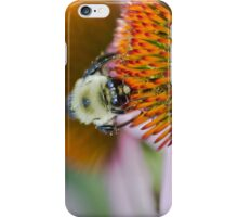 Bee on an Echinacea Flower iPhone Case/Skin