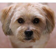 Puppy Eyes Photographic Print