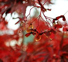 Red Japanese Oak Leaves and Seeds by LilCreativeSpce