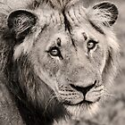 Staring Into the Soul of a Predator by Lindsay Basson