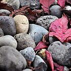 Fallen Leaves On The Rocks by LilCreativeSpce