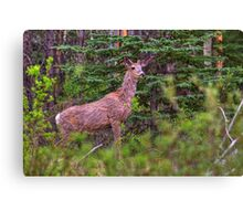 Scraggly Muley Canvas Print