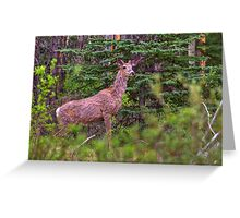 Scraggly Muley Greeting Card