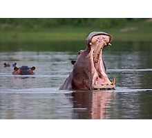 African Hippo Photographic Print