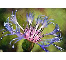 Azure Star Photographic Print