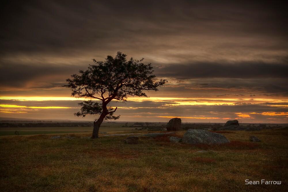 Behind the Lone Tree - Batesford, Victoria, Australia by Sean Farrow