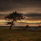 Behind the Lone Tree - Batesford, Victoria, Australia by Sean Farrow