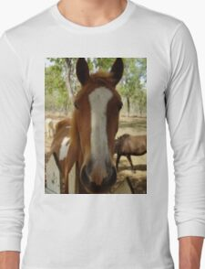 This lovely gentle Horse, on a T shirt, fit for adults, or kids. Long Sleeve T-Shirt