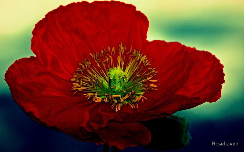 """Poppy Delight..."" by Rosehaven"