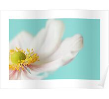Japanese Anemone Greetings Card Poster