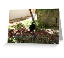 Magpie Two - 16 11 12 Greeting Card