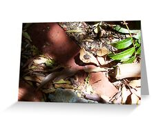 Beetle Two - 16 11 12 Greeting Card