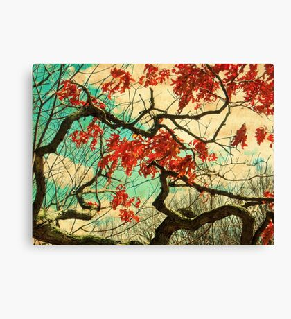 Gnarled Old Oak Tree Canvas Print