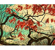 Gnarled Old Oak Tree Photographic Print
