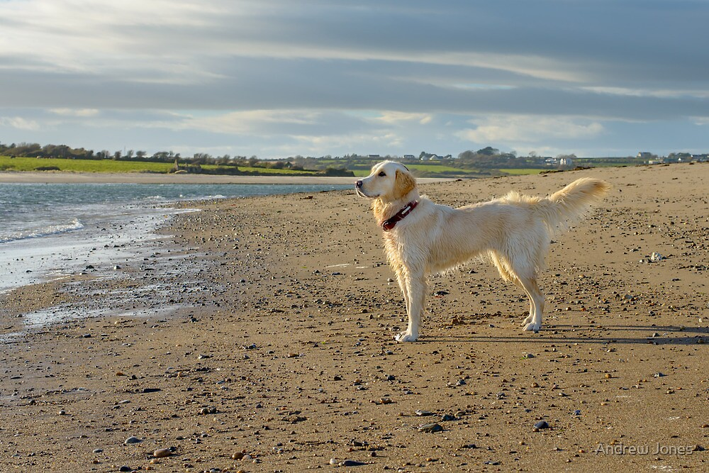 Megan enjoys her first birthday. Bannow Island, County Wexford by Andrew Jones