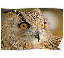 Bengal Owl Poster