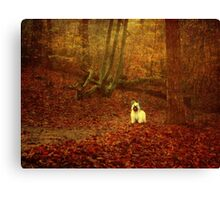 Hold On, I'm Coming... Canvas Print