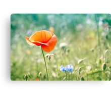 Poppy in blue and green field 1 Canvas Print