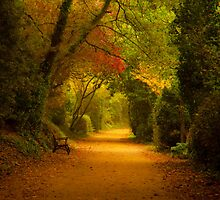 Autumn path, St. Aubin, Jersey by Rachael Talibart