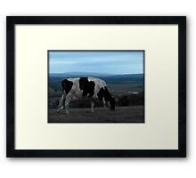 Amberly Cow Framed Print