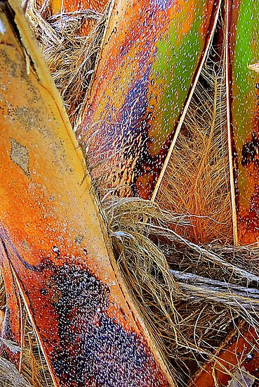Palm Bark in Living Color by AuntDot