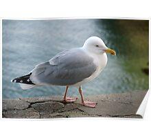 Seagull on harbourside wall, Salcombe, Devon, UK Poster