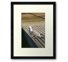 Seagull on pontoon, Salcombe, Devon, UK Framed Print