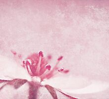 Strawberry Pink by Anne Staub