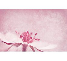 Strawberry Pink Photographic Print