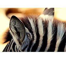Zebra Markings 1 Photographic Print