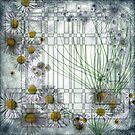 Dawn Daisies by penn gregory