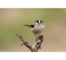 La boleta de plomes Photographic Print