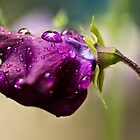 Drops by Andy Spencer