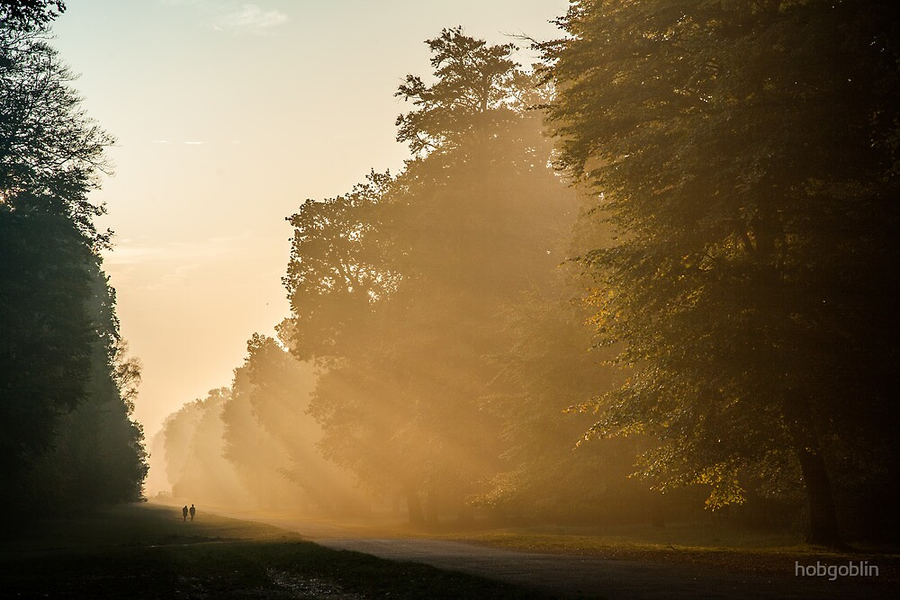 Misty morning at Ashridge Forest by hobgoblin