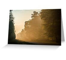 Misty morning at Ashridge Forest Greeting Card