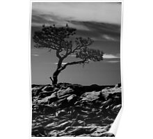 Tree Silhouette, American Southwest Poster