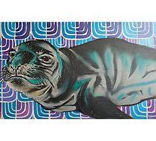 Sea lion  Photographic Print