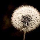 Dandelion by Pant52005