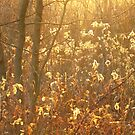 Golden Moments by lorilee