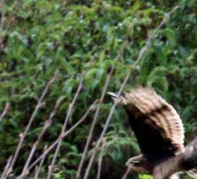 Hawk on the hunt Sticker