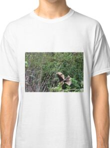 Hawk on the hunt Classic T-Shirt