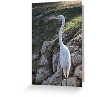 No egrets Greeting Card