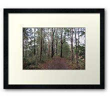 A Road Less Traveled Framed Print
