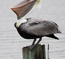 Pelican Smile by Carol Bailey White