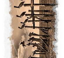 PELICAN ROOST iPhone by Kevin McLeod